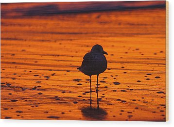 Gull Caught At Sunrise Wood Print by Allan Levin