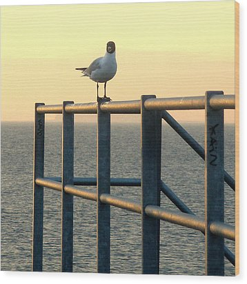 Gull On A Rail Wood Print by Michael Canning