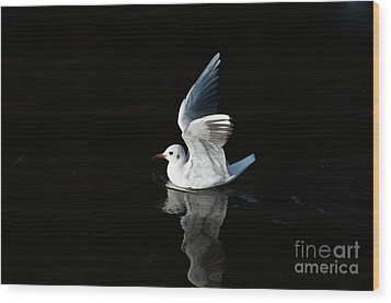 Gull On The Water Wood Print by Michal Boubin