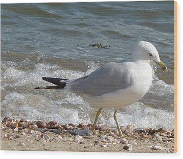 Gull Strolling The Shore Wood Print by Margie Avellino
