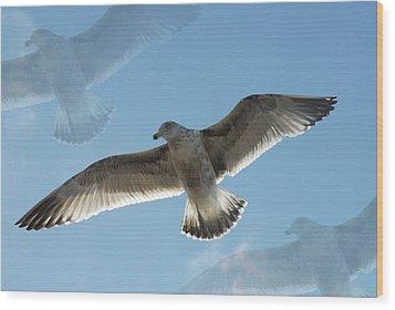 Gulls 41 Wood Print by Joyce StJames
