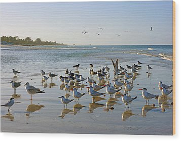 Gulls And Terns On The Sanbar At Lowdermilk Park Beach Wood Print by Robb Stan