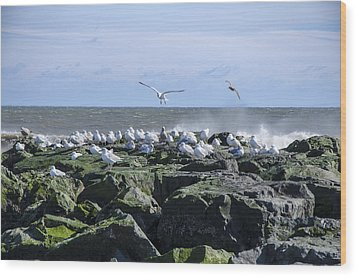 Gulls On Rock Jetty Wood Print by Maureen E Ritter