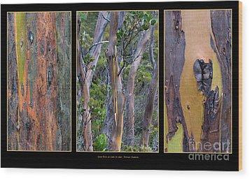 Gum Trees At Lake St Clair Wood Print by Werner Padarin