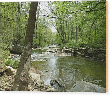 Gunpowder Falls - Ncr Trail Wood Print
