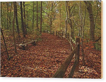 Gunpowder Falls Park Wood Print