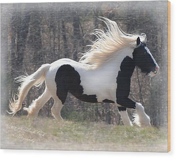 Gypsy Stallion Esperanzo Wood Print by Terry Kirkland Cook