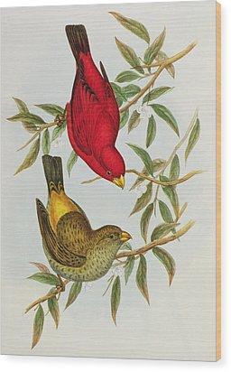 Haematospiza Sipahi Wood Print by John Gould