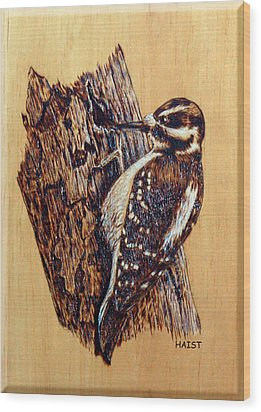 Hairy Woodpecker Wood Print by Ron Haist