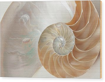 Half  Shell Nautilus Wood Print by John Hix