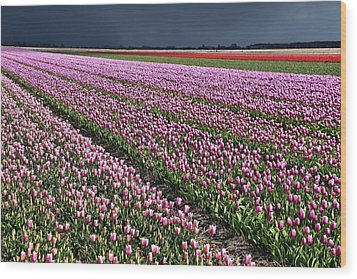 Half Side Purple Tulip Field Wood Print by Mihaela Pater