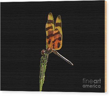 Wood Print featuring the photograph Halloween Pennant Dragonfly .png by Al Powell Photography USA