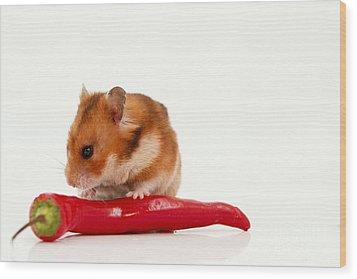 Hamster Eating A Red Hot Pepper Wood Print by Yedidya yos mizrachi