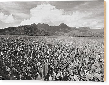 Hanalei Taro Fields Wood Print by Bob Abraham - Printscapes
