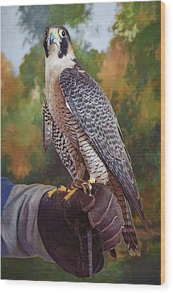 Wood Print featuring the photograph Hand Of The Falconer by Nikolyn McDonald