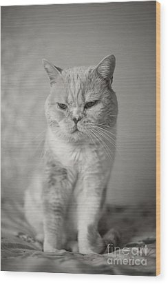 Wood Print featuring the photograph Handsome Cat by Aiolos Greek Collections