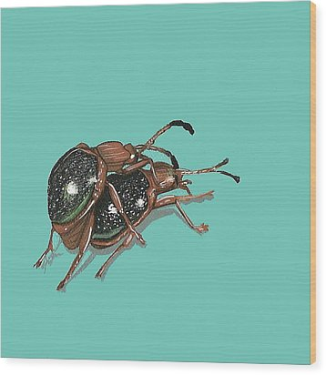 Handsome Fungus Beetles Wood Print