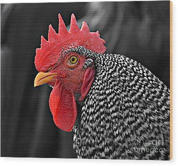Handsome Plymouth Rock Rooster Wood Print