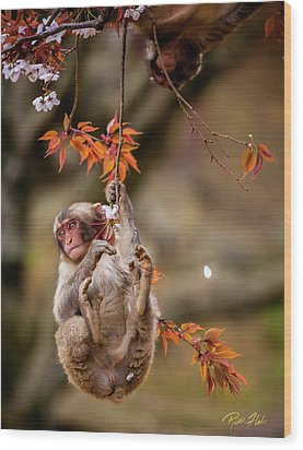 Wood Print featuring the photograph Hang In There, Baby Redux by Rikk Flohr