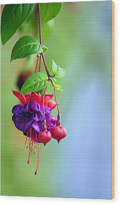 Hanging Gardens Fuschia Wood Print by Laura Mountainspring