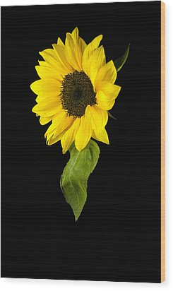 Wood Print featuring the photograph Hanging Sunflower by Elsa Marie Santoro