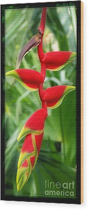 Hanging Tropical Splendor Wood Print by Sue Melvin