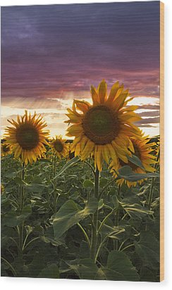 Happiness Is A Field Of Sunflowers Wood Print by Debra and Dave Vanderlaan