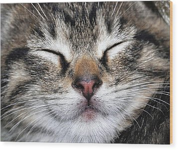 Happy Cat Wood Print by JAMART Photography