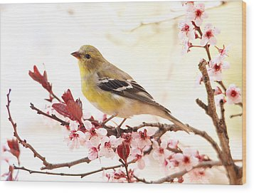 Happy Goldfinch Wood Print
