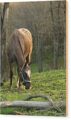 Wood Print featuring the photograph Happy Grazing by Angela Rath