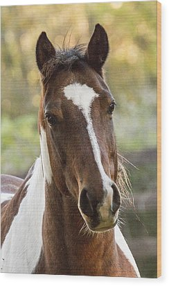 Happy Horse Wood Print