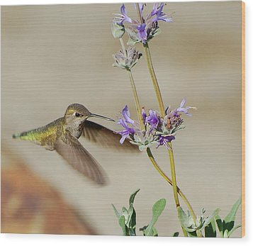 Happy Hummer Wood Print by Jean Booth