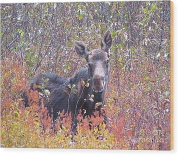 Happy Moose Wood Print by Elizabeth Dow