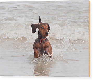 Happy Surf Dog Wood Print