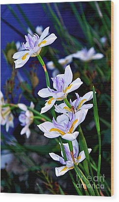 Happy Wild Iris Wood Print by Kaye Menner