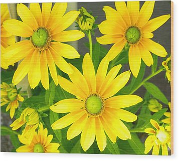 Happy Yellow Summer Cone Flowers In The Garden Wood Print by Amy McDaniel