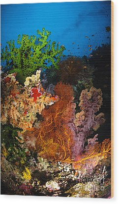 Hard Coral And Soft Coral Seascape Wood Print by Todd Winner