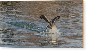 Wood Print featuring the photograph Hard Landing by Yeates Photography