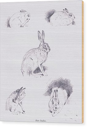 Hare Studies Wood Print by Archibald Thorburn