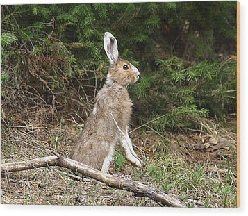 Wood Print featuring the photograph Hare That by DeeLon Merritt