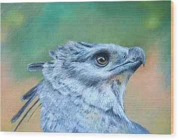 Harpy Eagle Two Wood Print by Ceci Watson