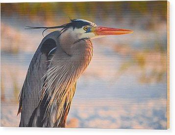 Harry The Heron With Plumage Close-up Wood Print
