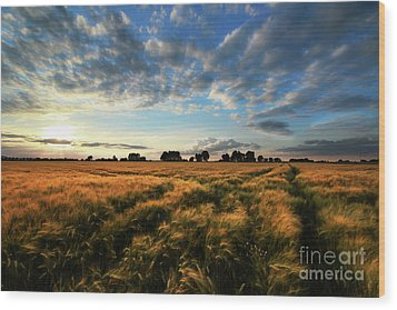 Wood Print featuring the photograph Harvest by Franziskus Pfleghart