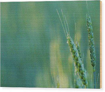 Wood Print featuring the photograph Harvest Hues by Blair Wainman