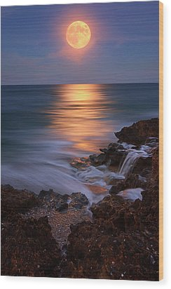 Harvest Moon Rising Over Beach Rocks On Hutchinson Island Florida During Twilight. Wood Print