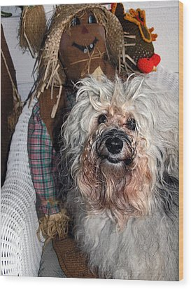 Wood Print featuring the photograph Havanese Cutie by Sally Weigand