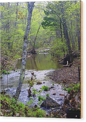 Haw Creek Wood Print by Marty Koch