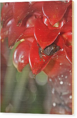 Hawaiian Frog Wood Print by Heather Coen