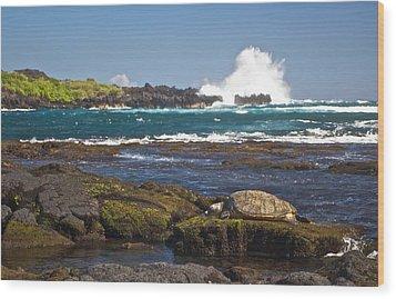 Hawaiian Green Sea Turtle  Wood Print by James Walsh