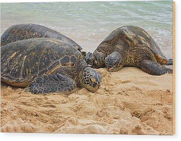 Hawaiian Green Sea Turtles 1 - Oahu Hawaii Wood Print by Brian Harig